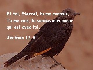 Jérémie 12. 3