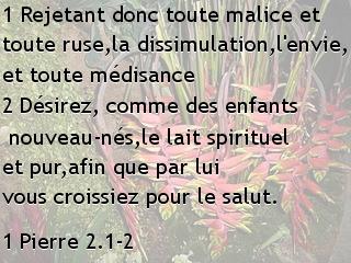 1 Pierre 2.1-2.jpg
