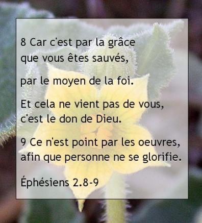 Éphésiens 2.8-9..jpg