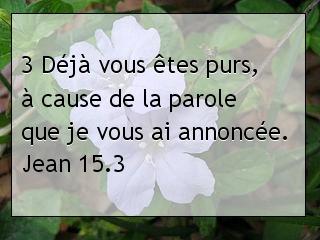 Jean 15.3.jpg
