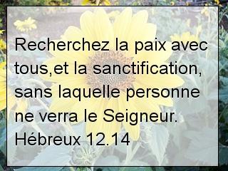 Hébreux 12.14.jpg