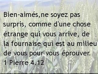 1 Pierre 4.12.jpg