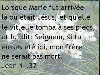Jean 11.32.jpg