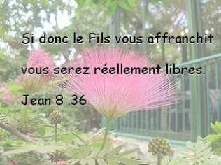 Jean 8.36