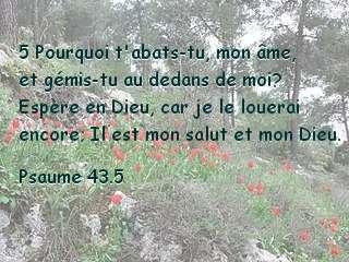 Psaume 43.5