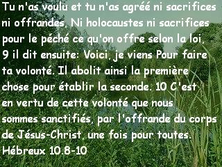 Hébreux 10.8-10