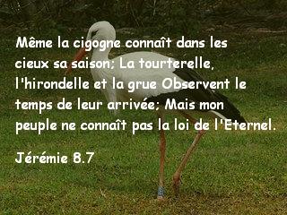 Jérémie 8.7